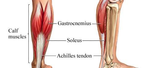 Calf-Muscle.jpg